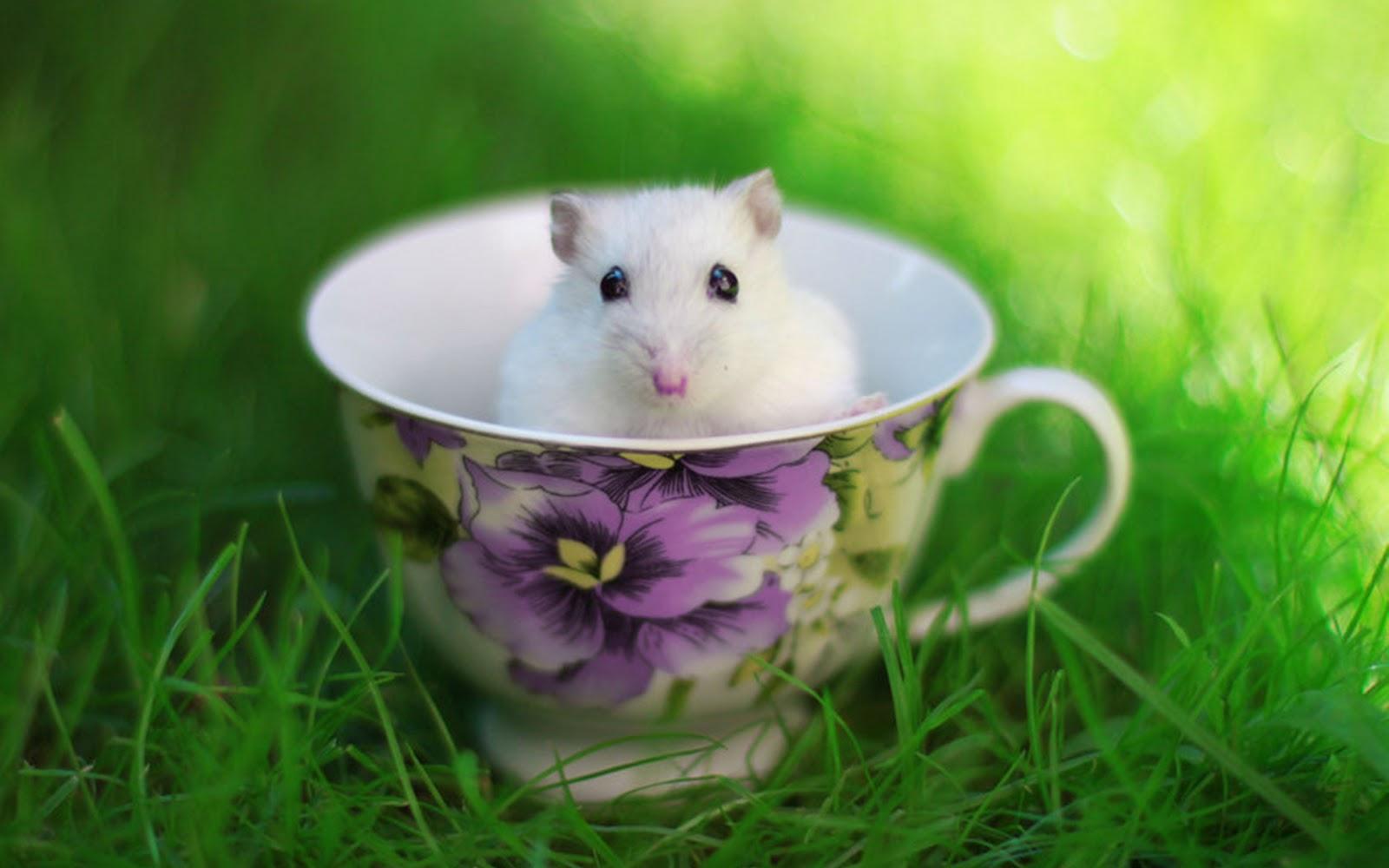 Cute Hamster in the Cup Wallpaper Wallpaper ME 1600x1000