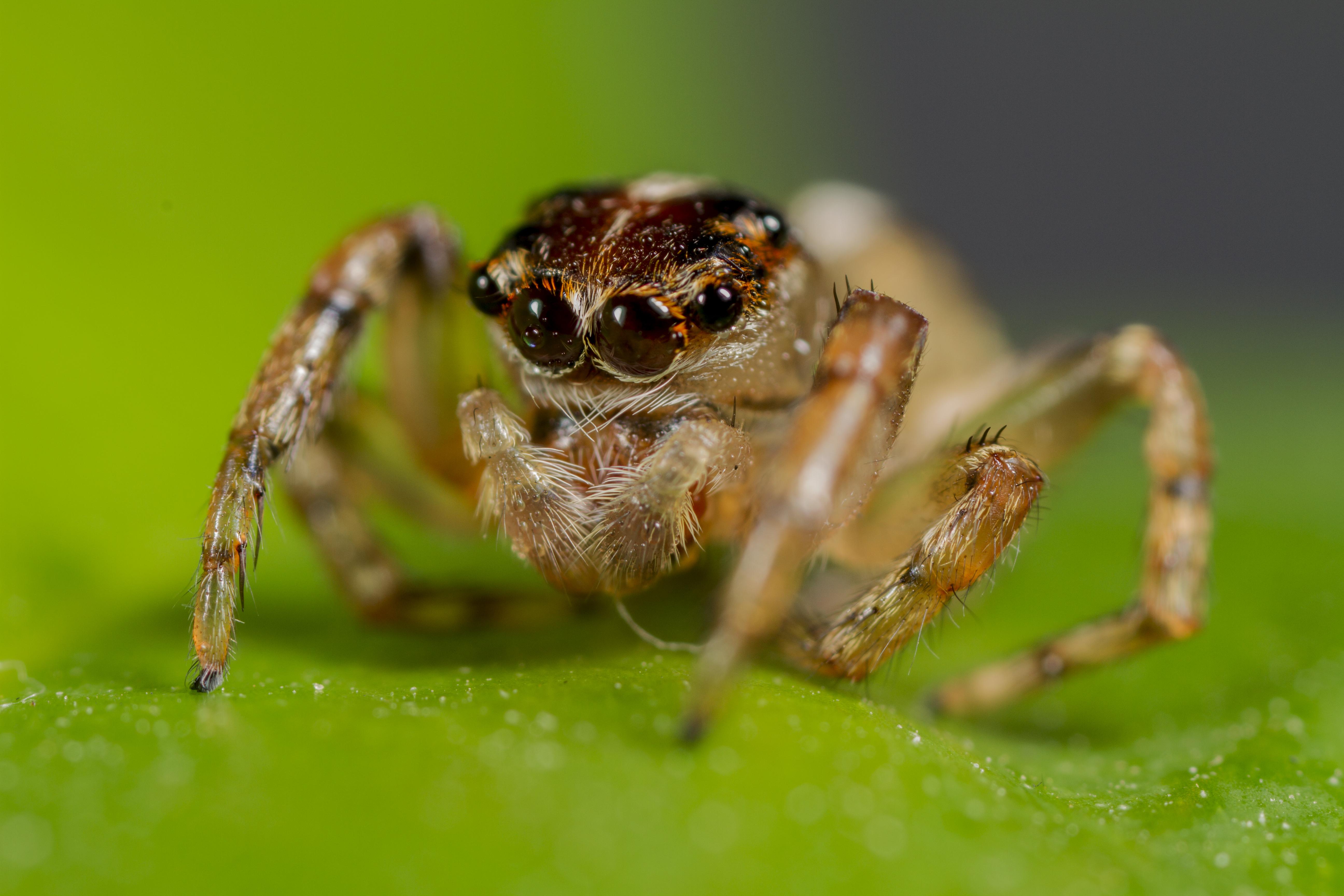 spider cute jumping wallpapersafari