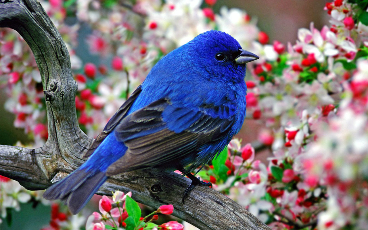 WallpapersFlowers on the bright feathers of birds photo wallpaper 6 1280x800