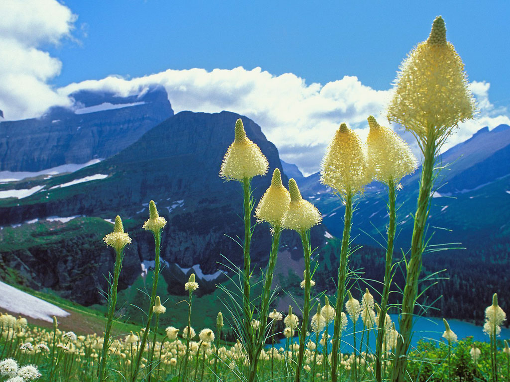 Bear grass and Grinell Lake couple of mountains too 1024x768