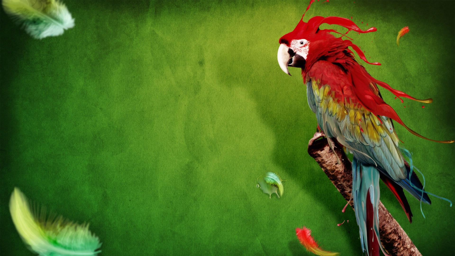 Parrot Backgrounds PC Mobile Gadgets Compatible 1920x1080 1920x1080
