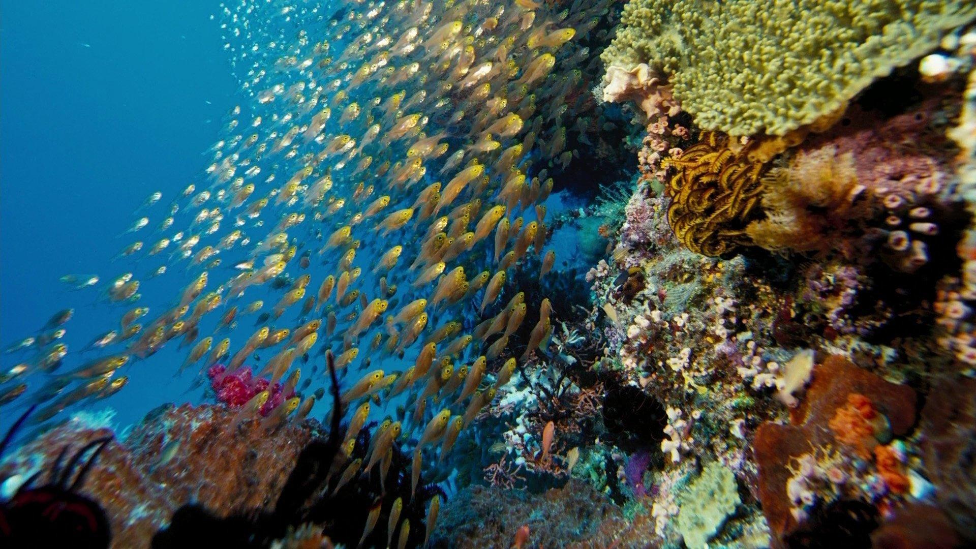 3d Under The Sea Wallpaper