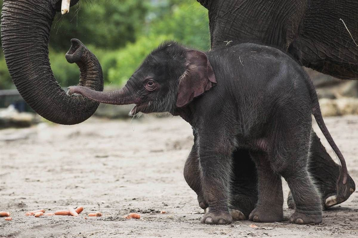 Cute Baby Elephant HD Wallpapers Daily Backgrounds in HD 1200x800