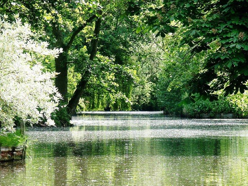 forest lake placid wallpaper   ForWallpapercom 808x606