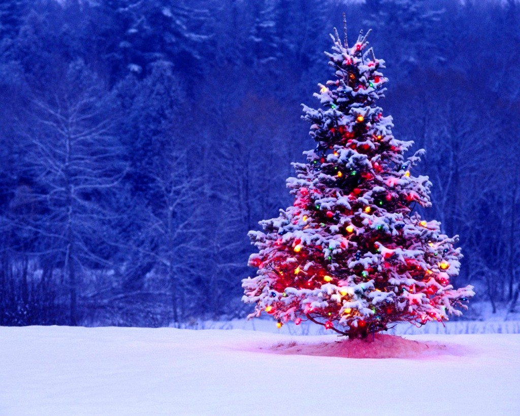 animated christmas wallpapers outdoor christmas tree 1024x819