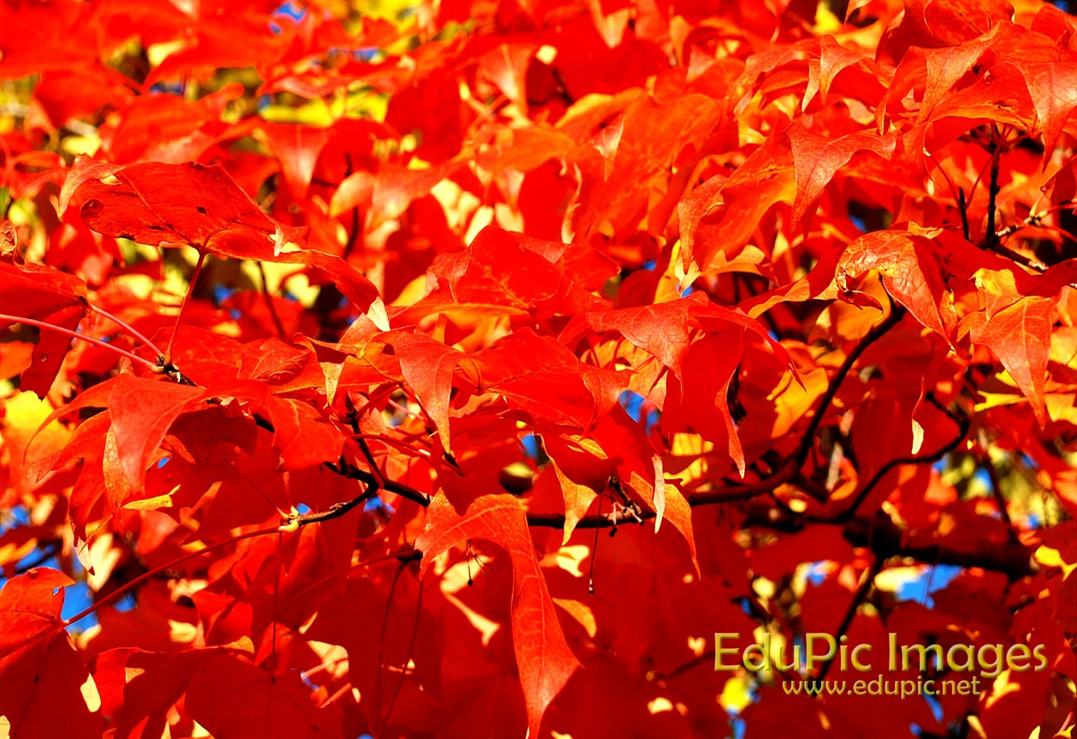 Fall Colors Desktop Wallpapers Pictures
