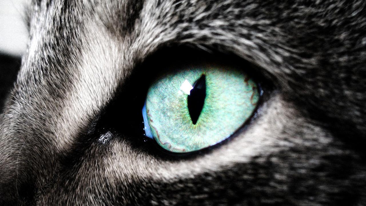 Cat Eyes Wallpaper Wallpapersafari