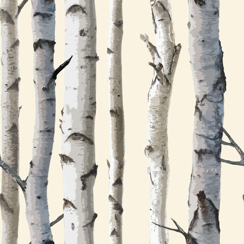 Cole And Sons Birch Tree Wallpaper Wallpapersafari