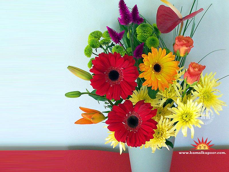 flowers wallpapers flowers desktop wallpaper download www 800x600