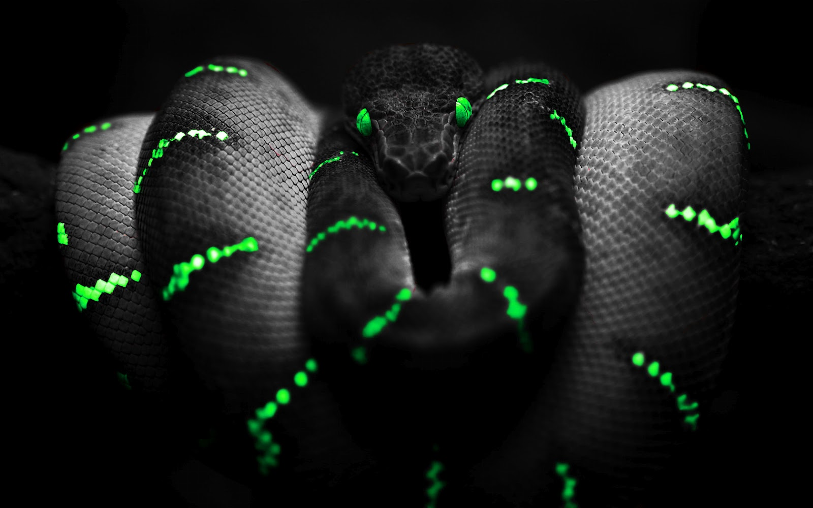 Neon Snake Wallpaper 1600x1000