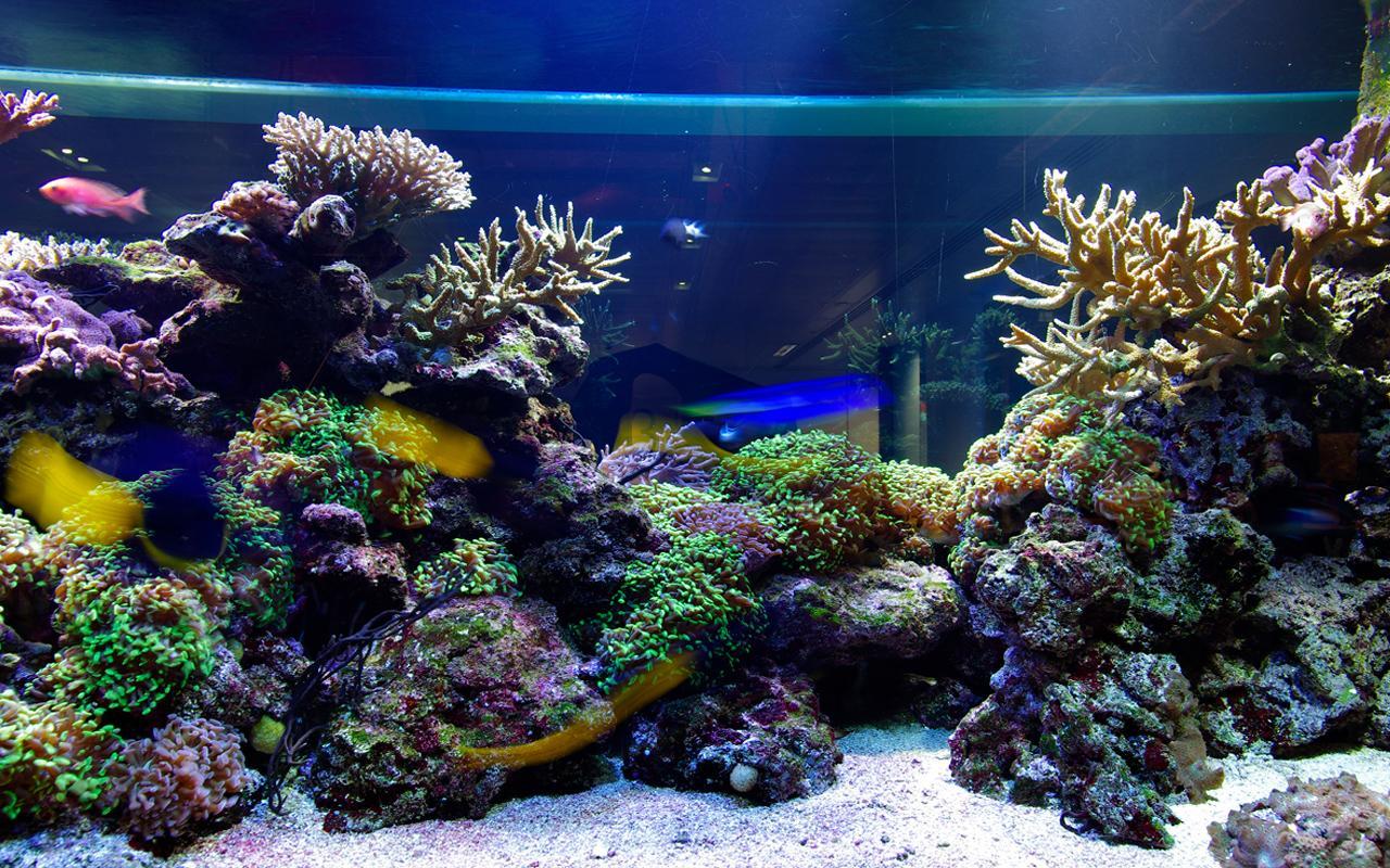 3d Desktop Aquarium Live Wallpaper Download 1280x800