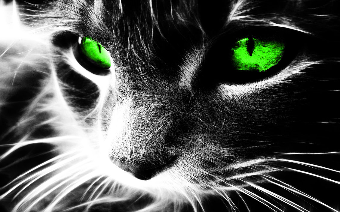 Neon Cat Wallpapers Wallpapersafari