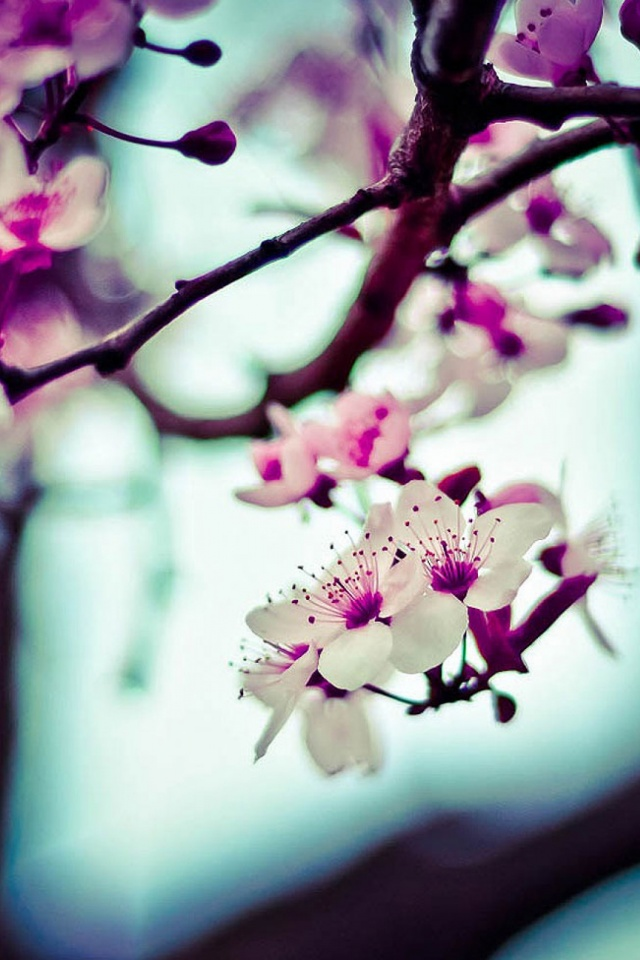 Beautiful Flowers Mobile Wallpaper   Mobiles Wall 640x960