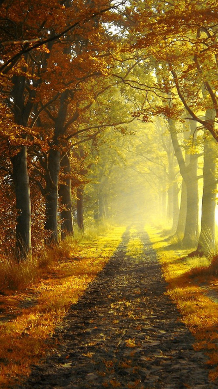 Autumn morning iPhone 6 Wallpapers HD iPhone 6 Wallpaper 750x1334