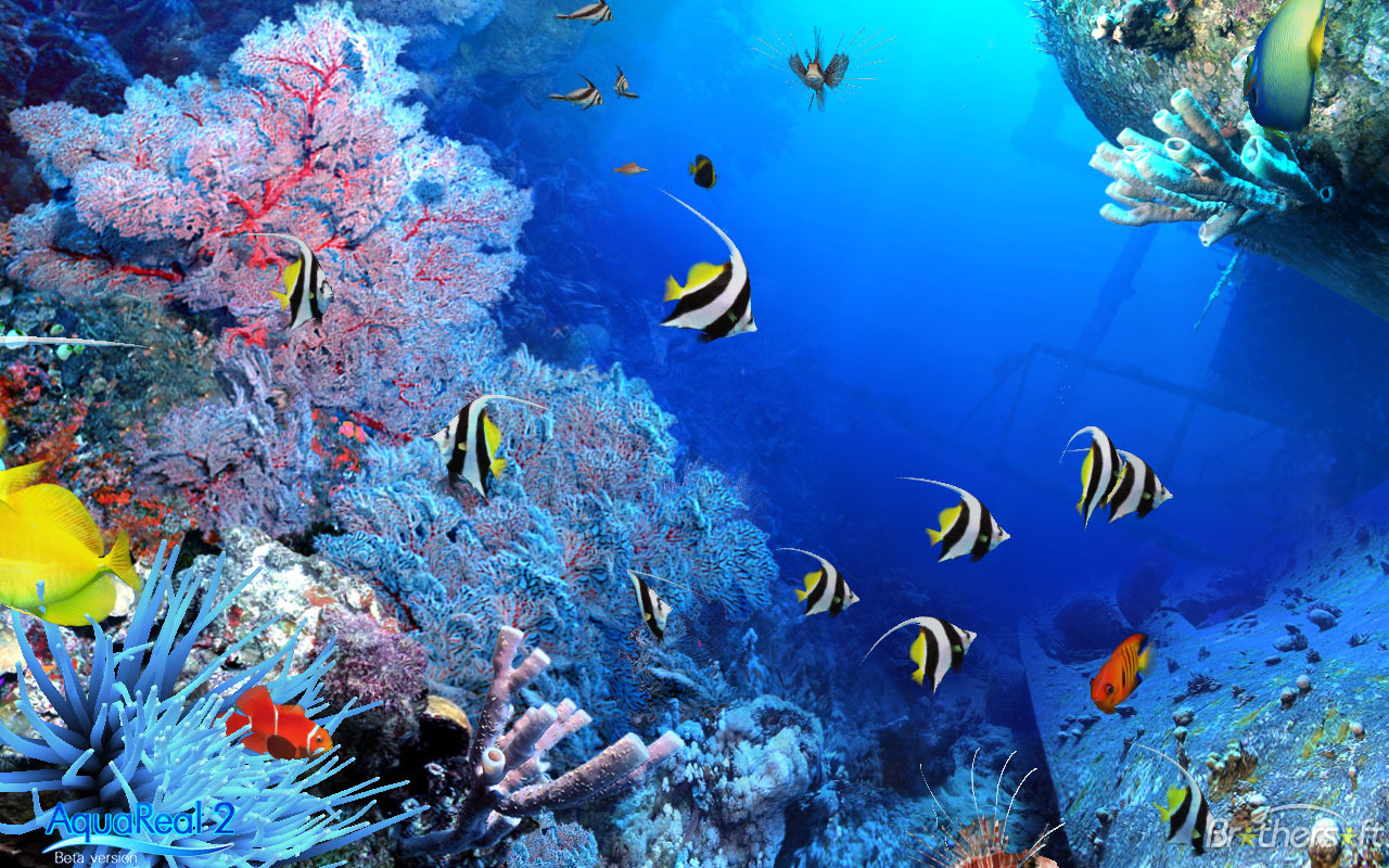 Free 3d fish tank wallpaper wallpapersafari for Moving fish wallpaper