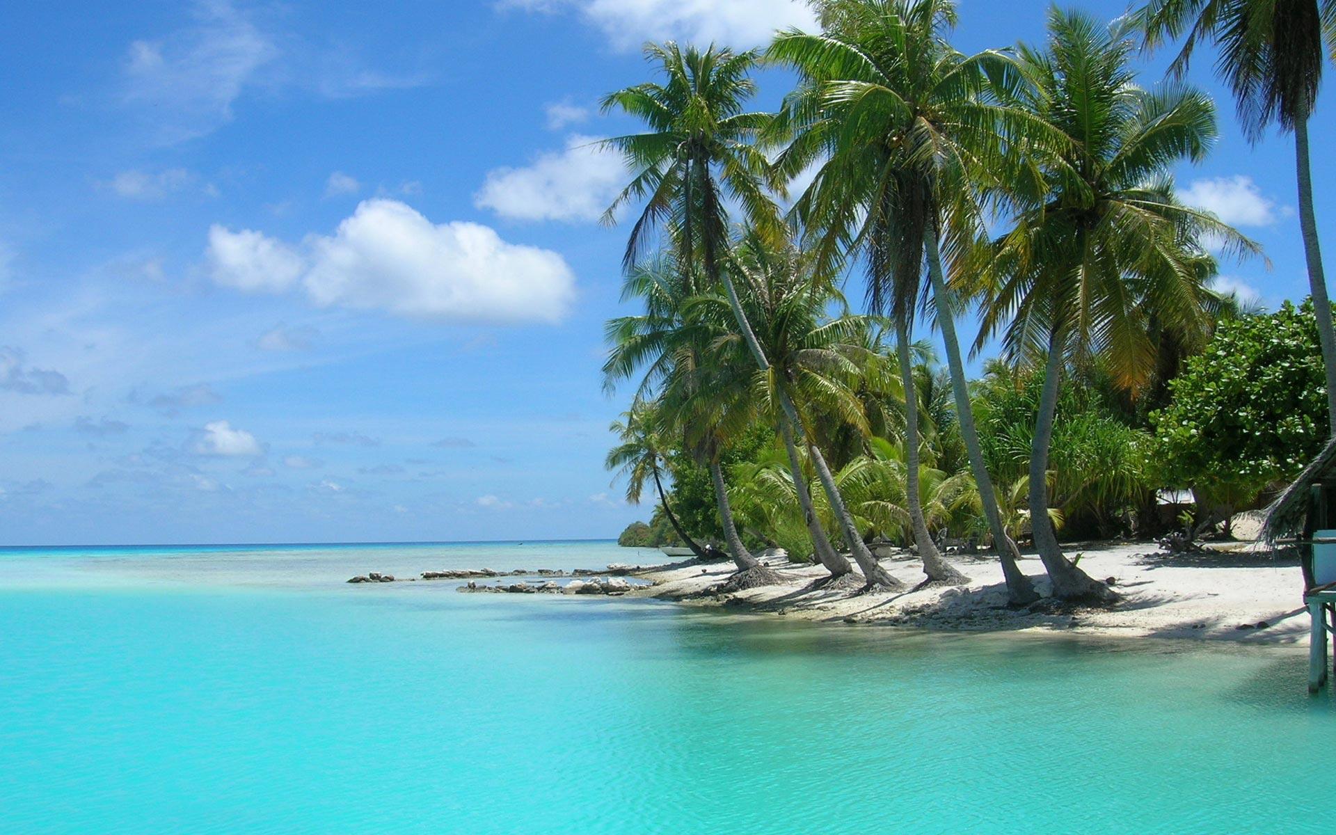 Palm Tree Beach 1920x1200