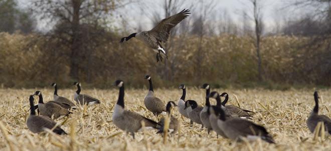 Goose Hunting Wallpapers Ashland landing 660x301