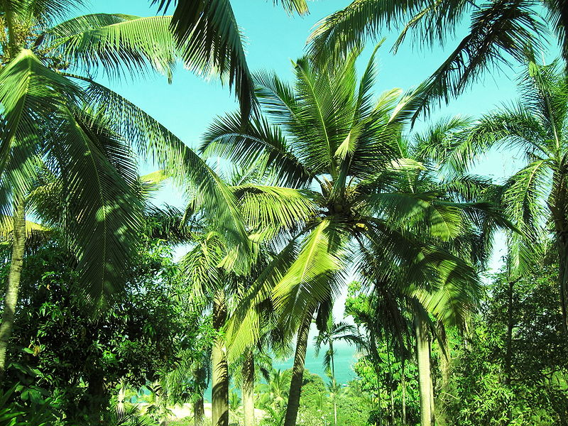 Tropical Palm Trees Things About Trees 800x600