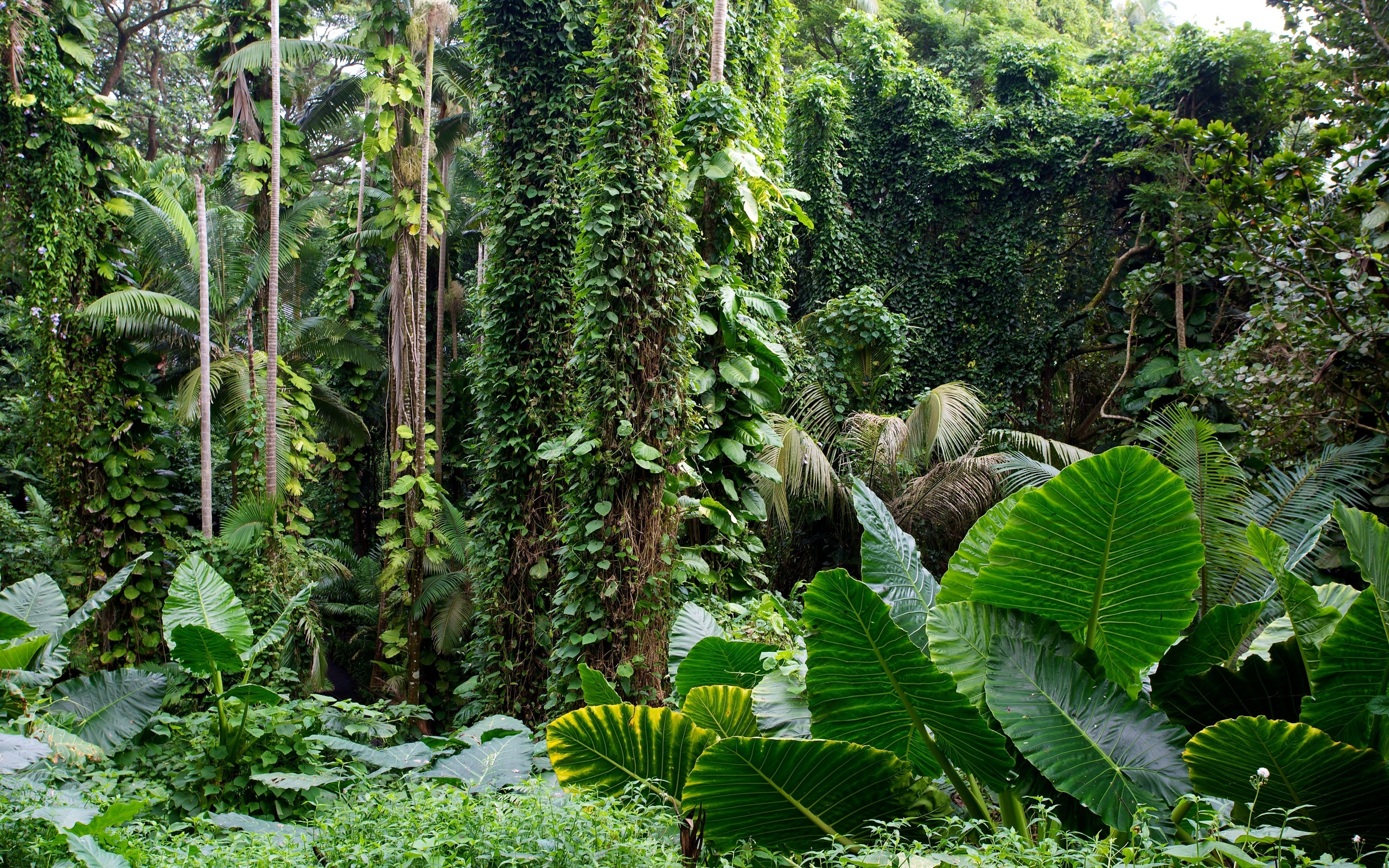 tropical jungle wallpaper - photo #27