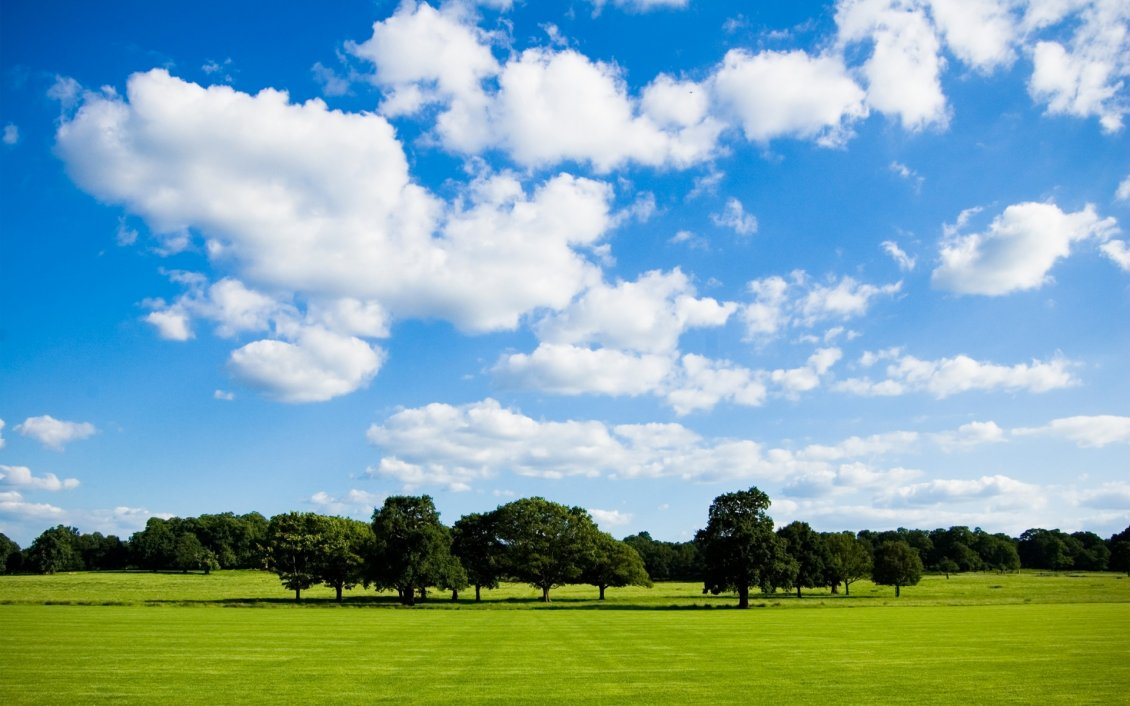 Beautiful summer day in the park   HD wallpaper 1130x706