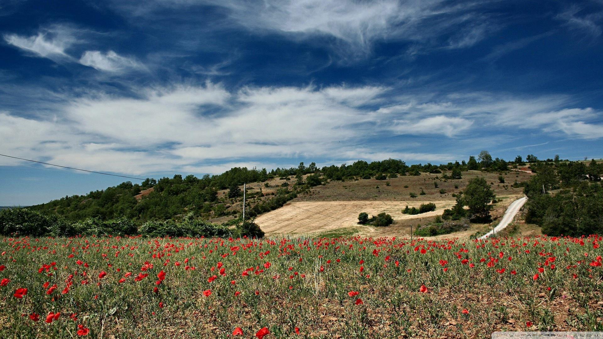 Field Of Poppies 1 Wallpaper 1920x1080 Field Of Poppies 1 1920x1080