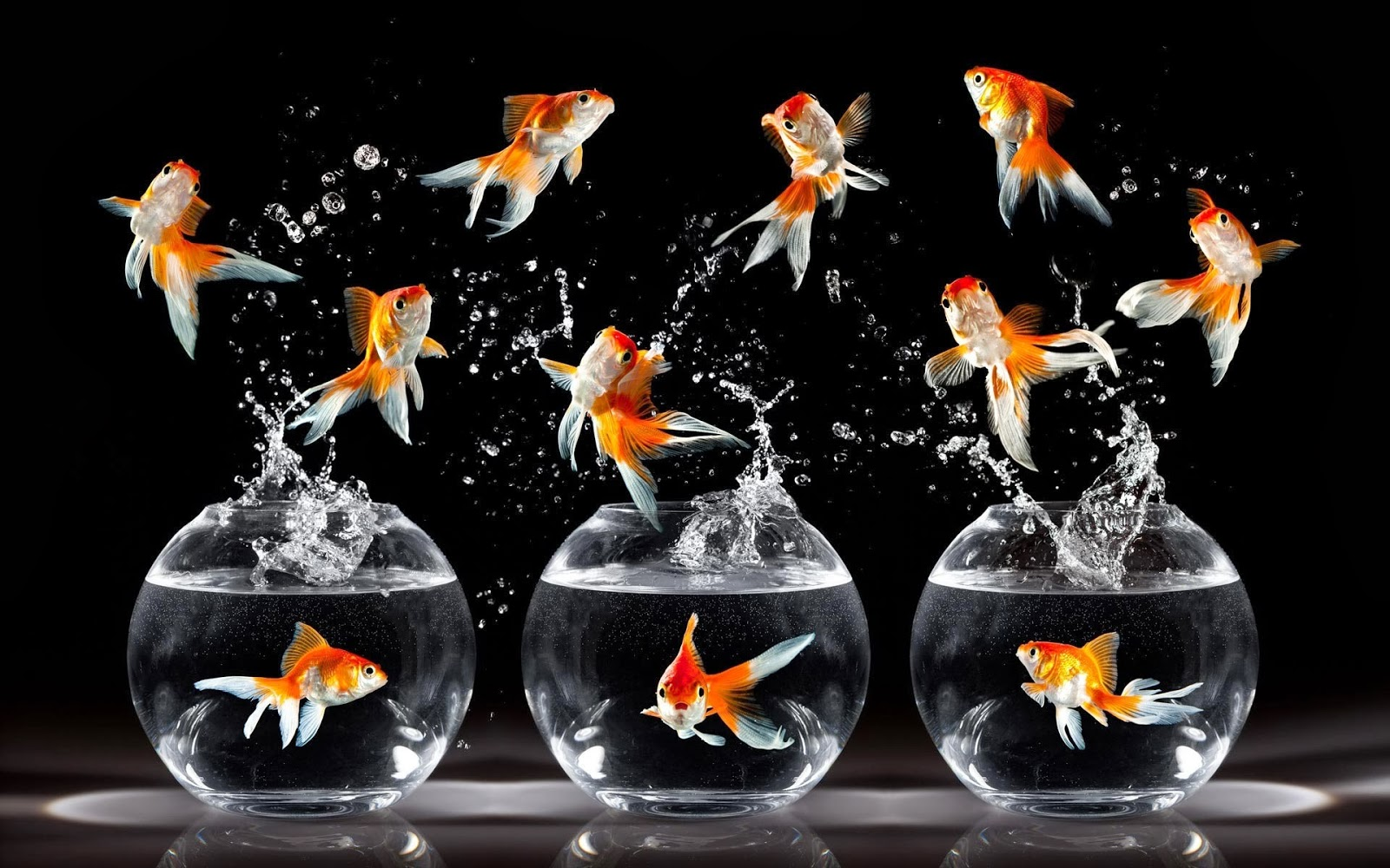 Goldfish wallpaper for walls   beautiful desktop wallpapers 2014 1600x1000