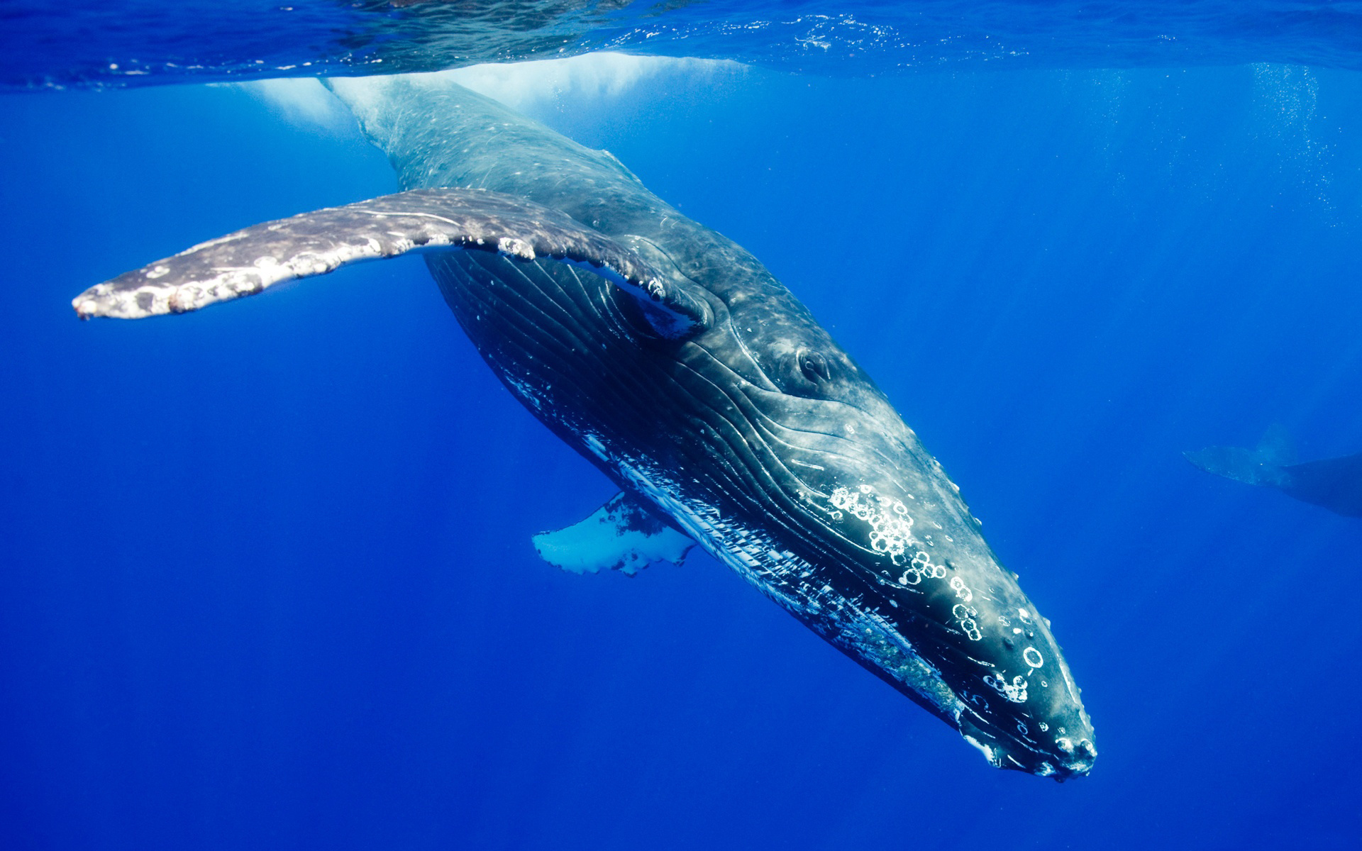 Whale HD Wallpapers Download Desktop Wallpaper Images 1920x1200
