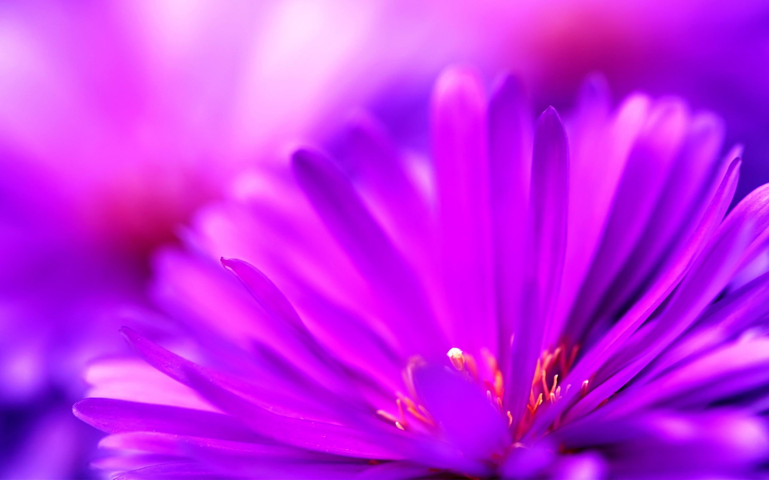 Cute Purple Flower   Magic4Wallscom 2560x1600