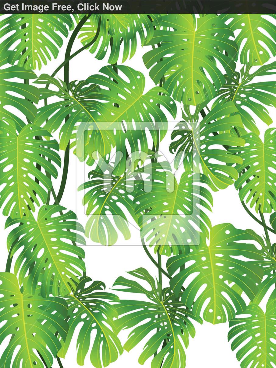 Tropical Leaf Wallpaper 906x1210