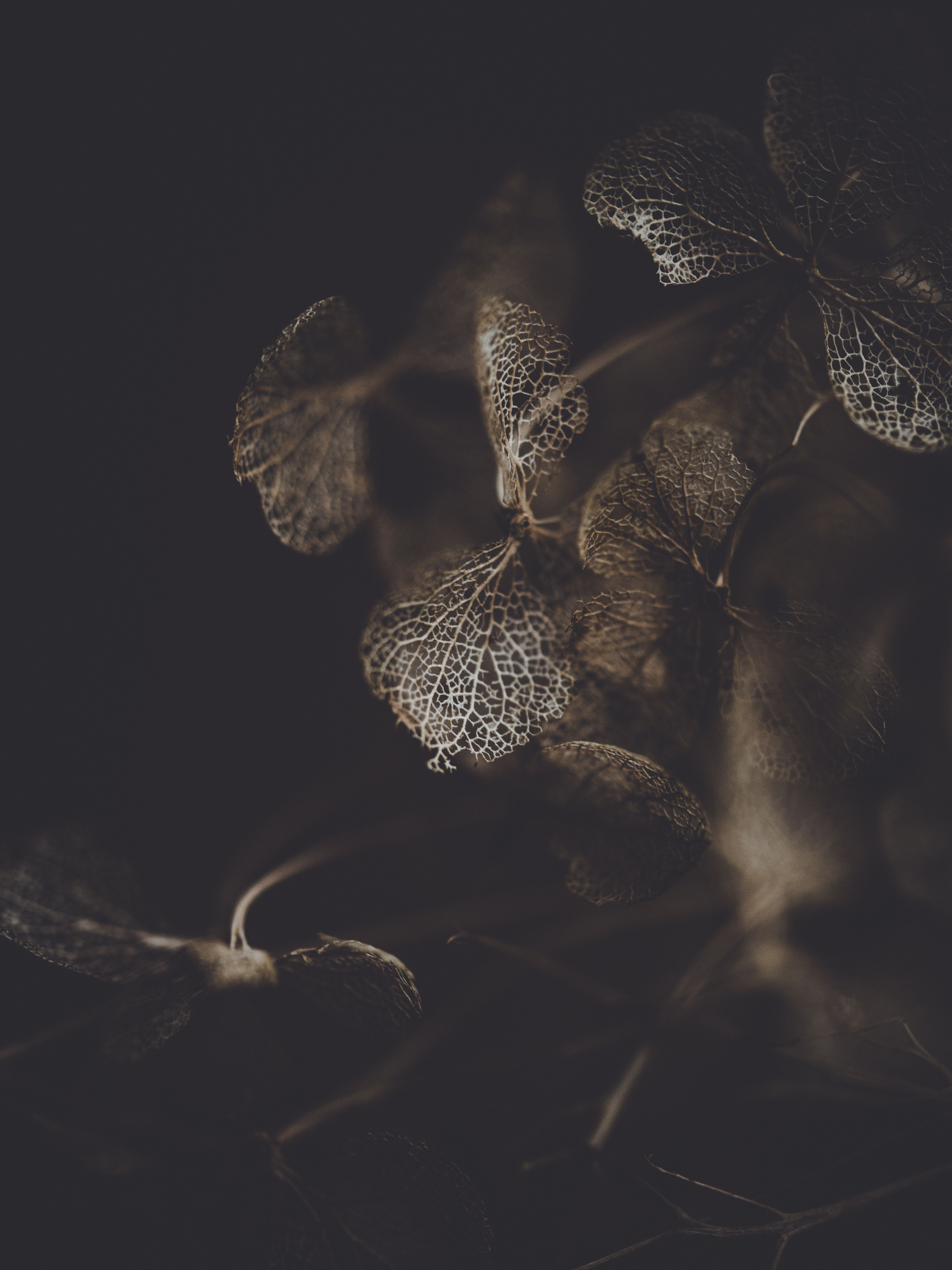 brown plant against dark background RICOH IMAGING COMPANY LTD 6144x8192