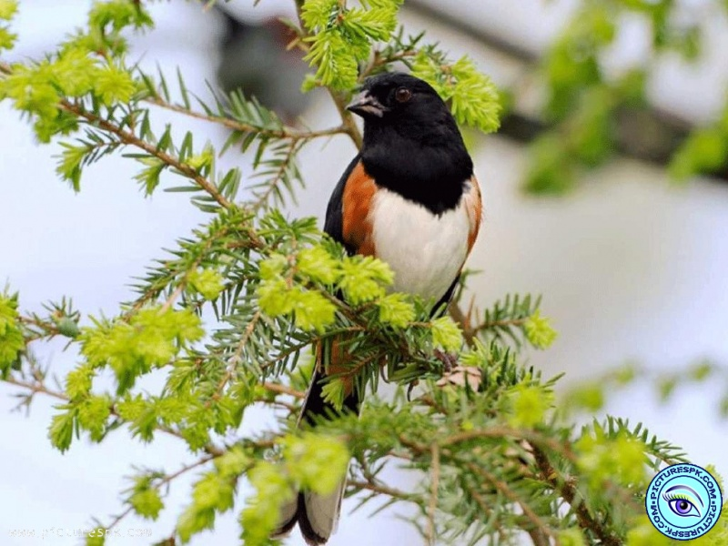 View Spring Bird Picture Wallpaper in 800x600 Resolution 800x600