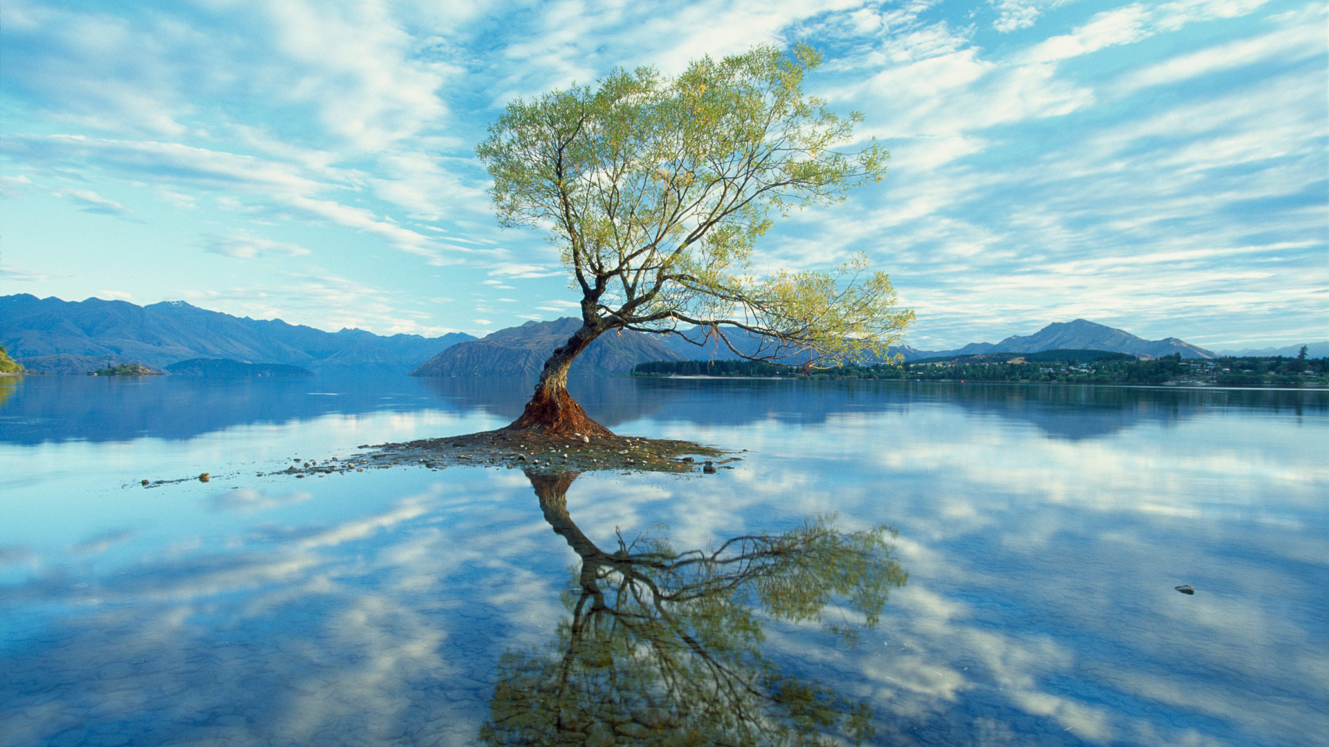 A partially underwater submerged tree in Lake Wanaka New Zealand 1920x1080