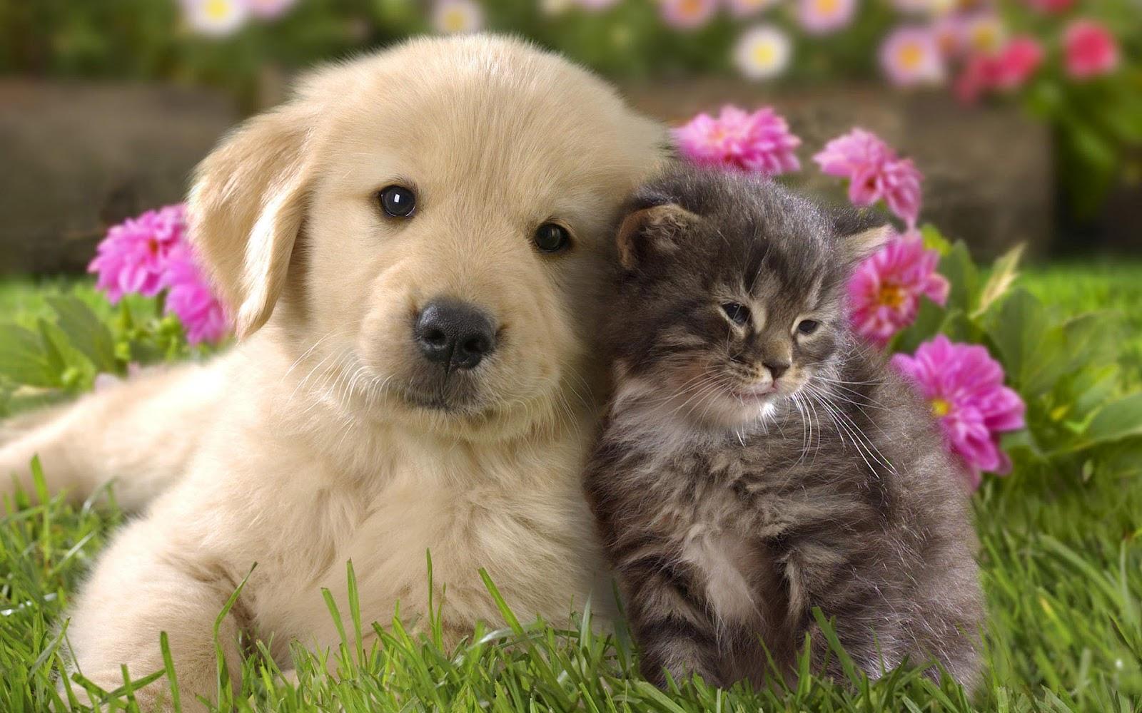 Cute cat and dog cuddling wallpaper 1600x1000
