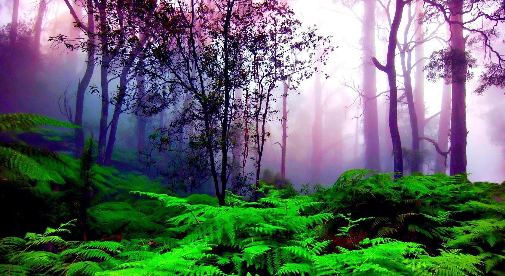 Purple and green nature wallpaper   ForWallpapercom 1680x920
