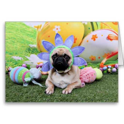 Resting Easter Pug photo and wallpaper Beautiful Resting Easter Pug 512x512