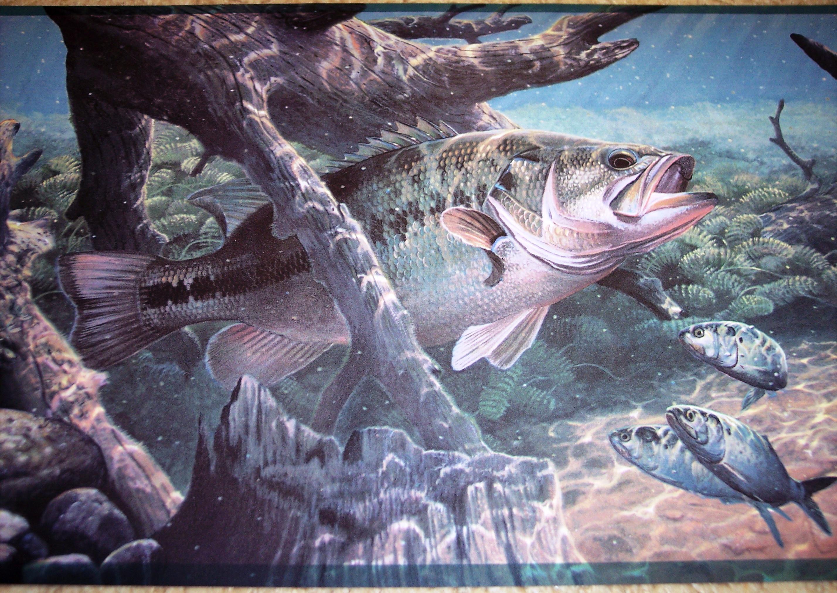 Bass Fishing Wallpaper Wallpaper border big bass 2856x2022