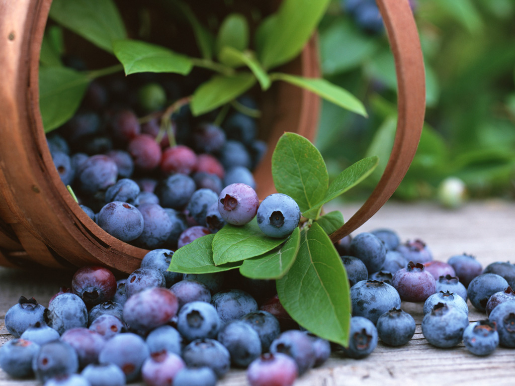 blueberry fruit pics wallpaper desktop blueberry pics fruit wallpaper 1024x768
