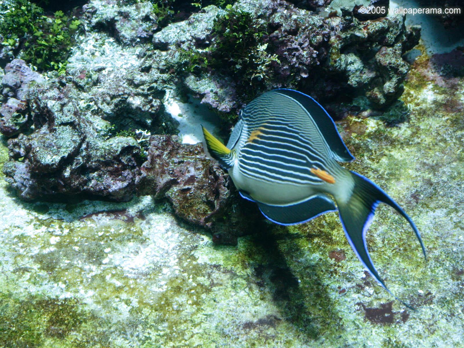 Saltwater Fish Desktop Wallpaper Wallpapersafari