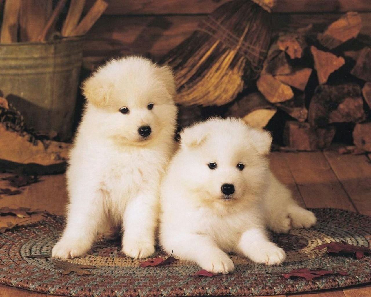 All Wallpapers Akita Puppies hd Wallpapers 2013 1280x1024