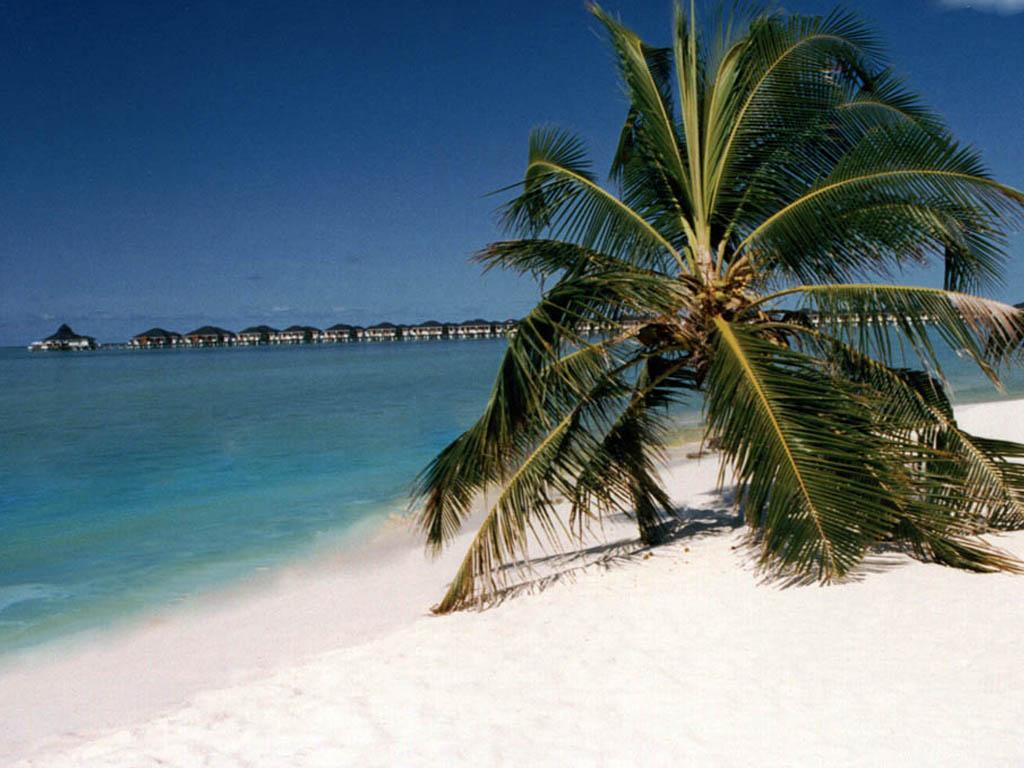 tropical beach wallpaper 120 - photo #4