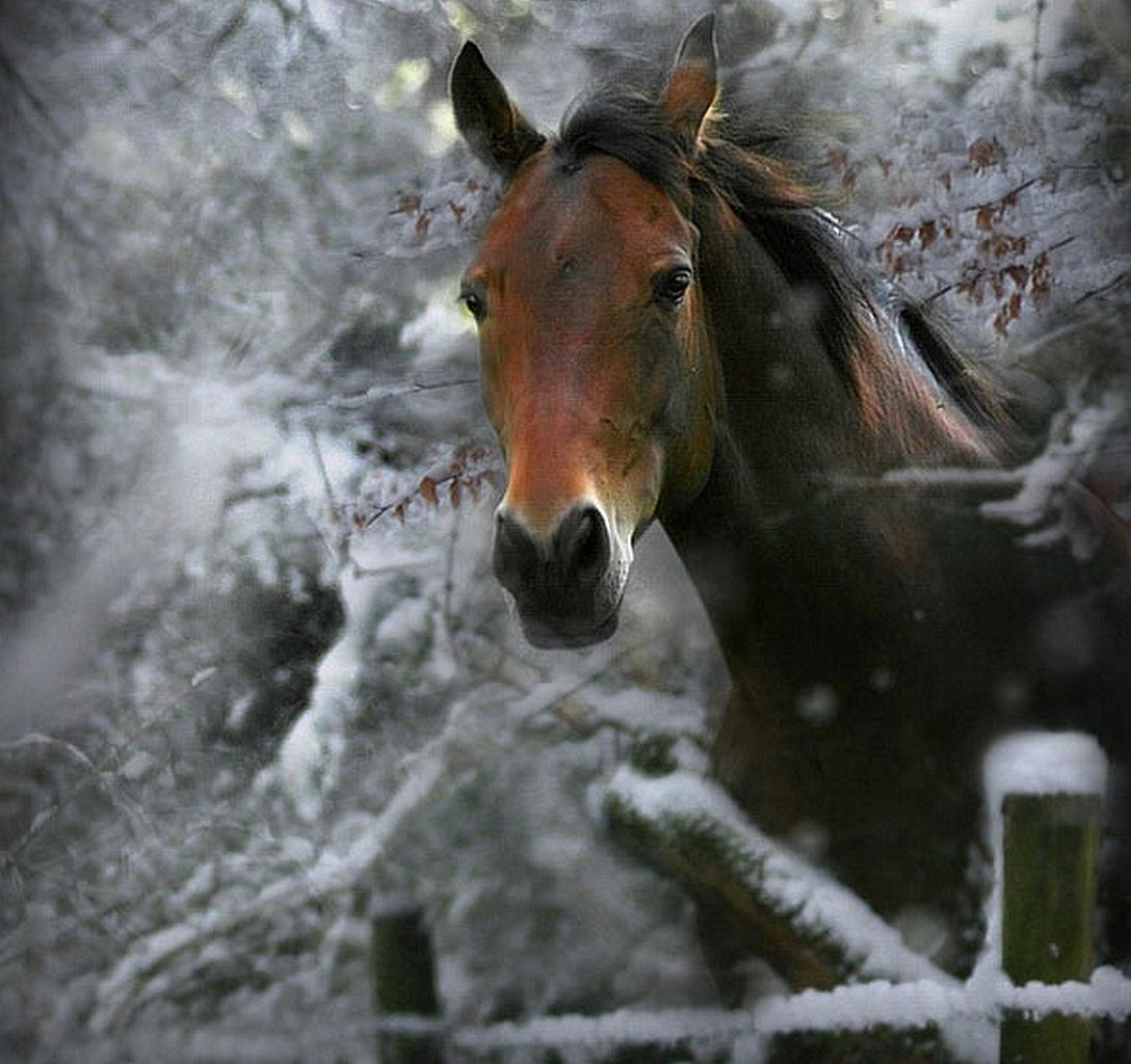 HORSE ON WINTER wallpaper   ForWallpapercom 1088x1024