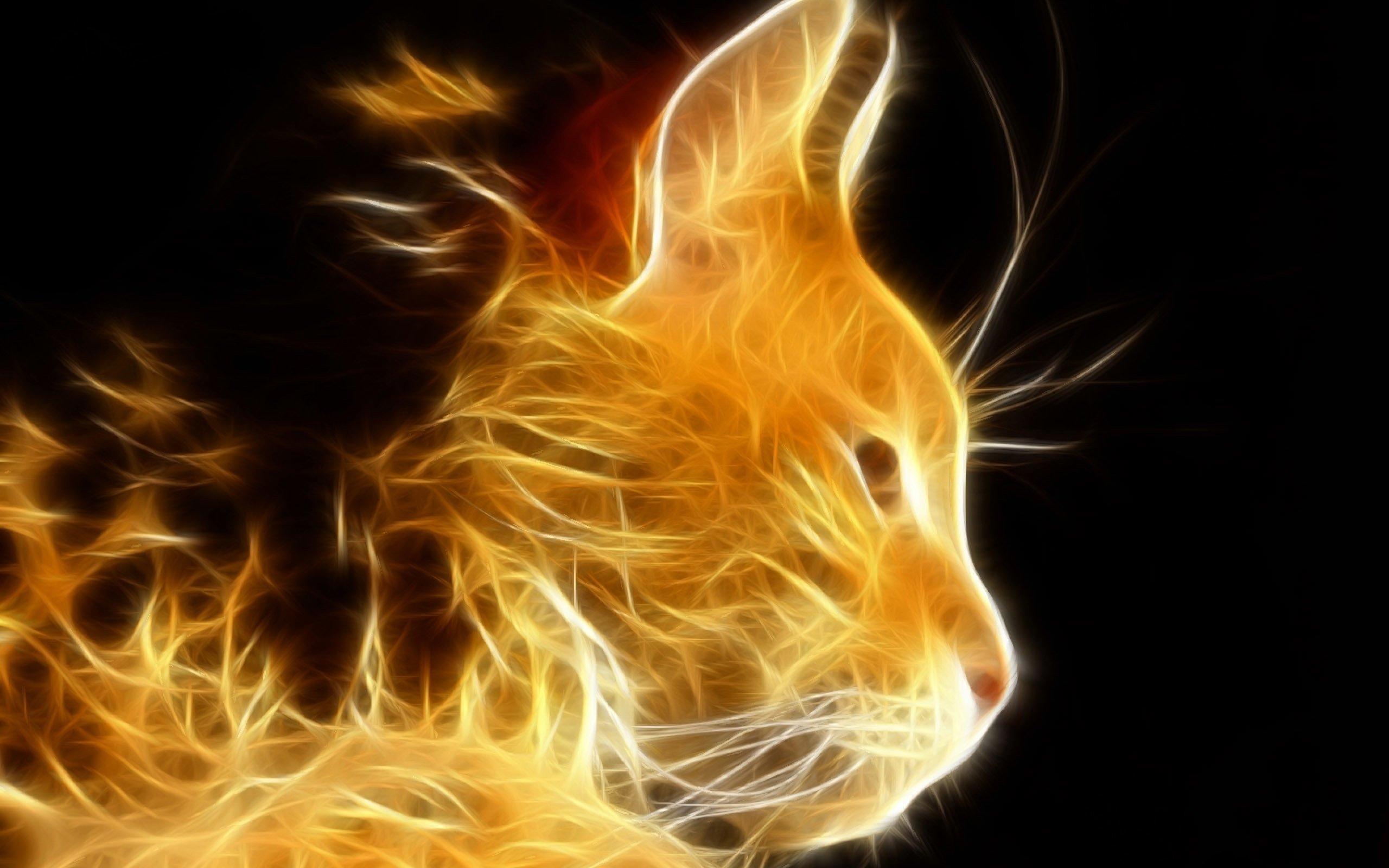Fire cat Wallpaper 30005 2560x1600