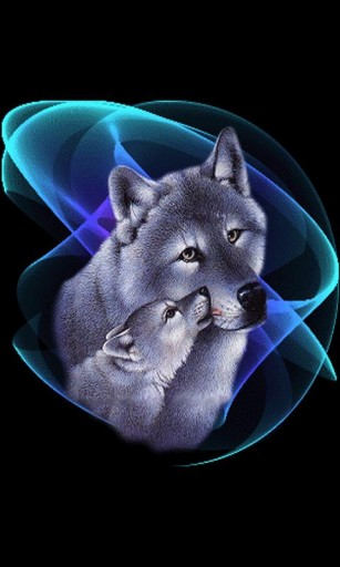 live wolf wallpapers wallpapersafari
