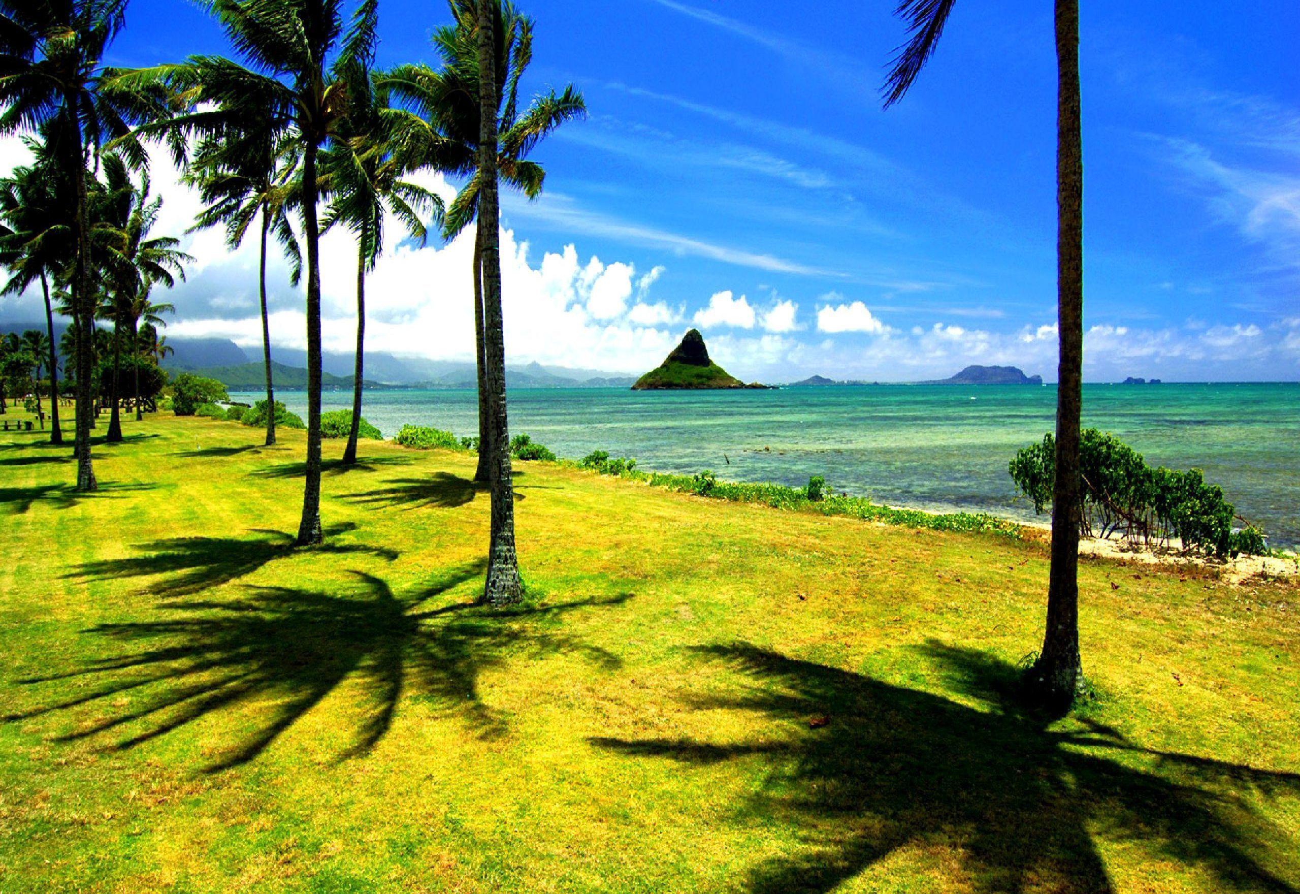 Wallpaper beach palm trees beach ocean wallpapers nature   download 2560x1760