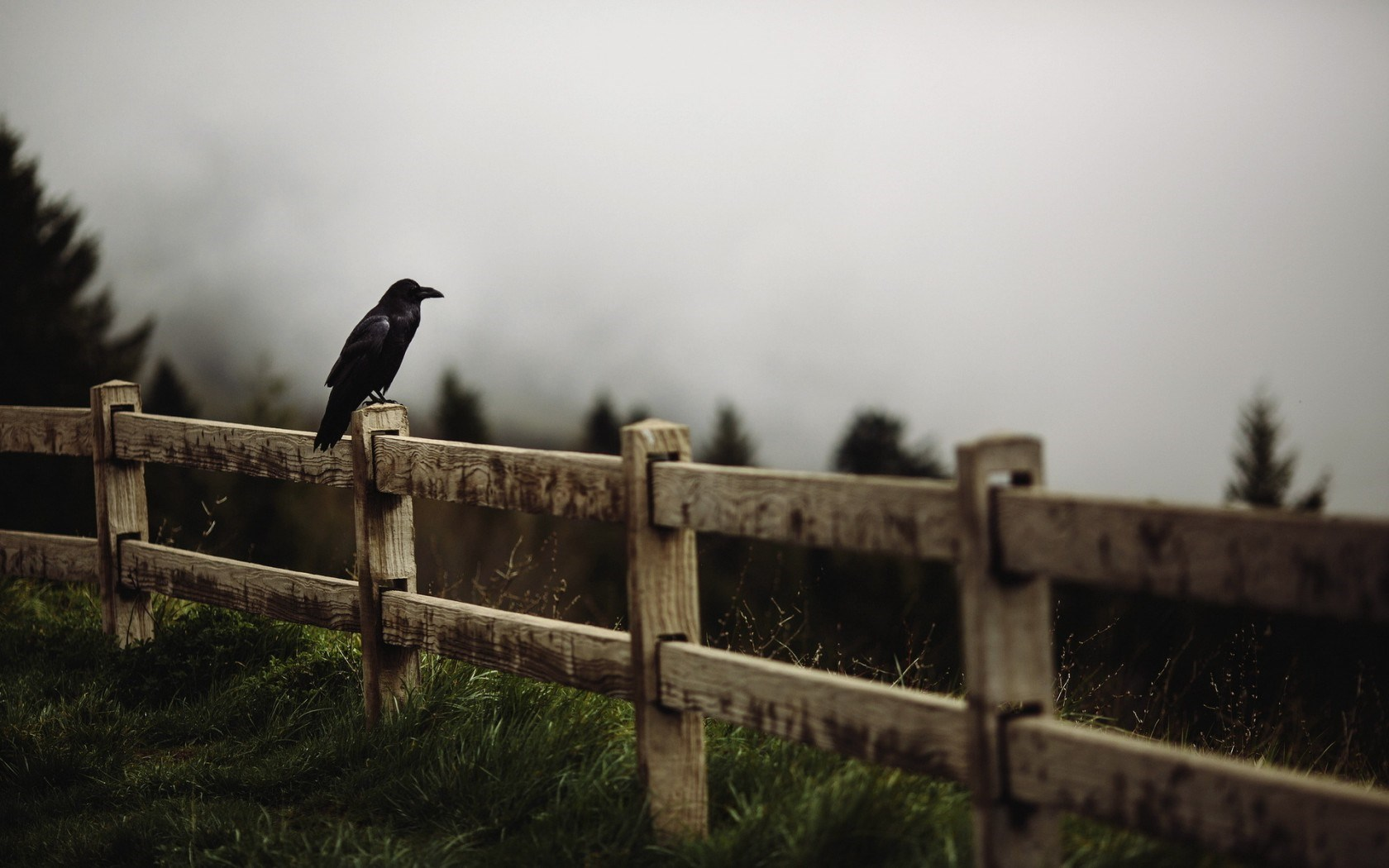 raven bird fence 2015 09 23 8 total views 8 1 views for 7 days 1 raven 1680x1050