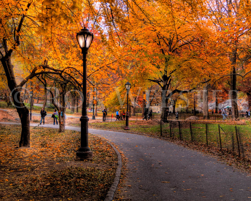 Central Park in Autumn 8x10 Fine Art Photo by RobWebsterPhoto 1000x800