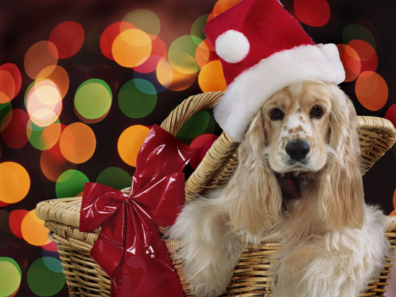 Wallpapers Club christmas animals wallpapers 800x600