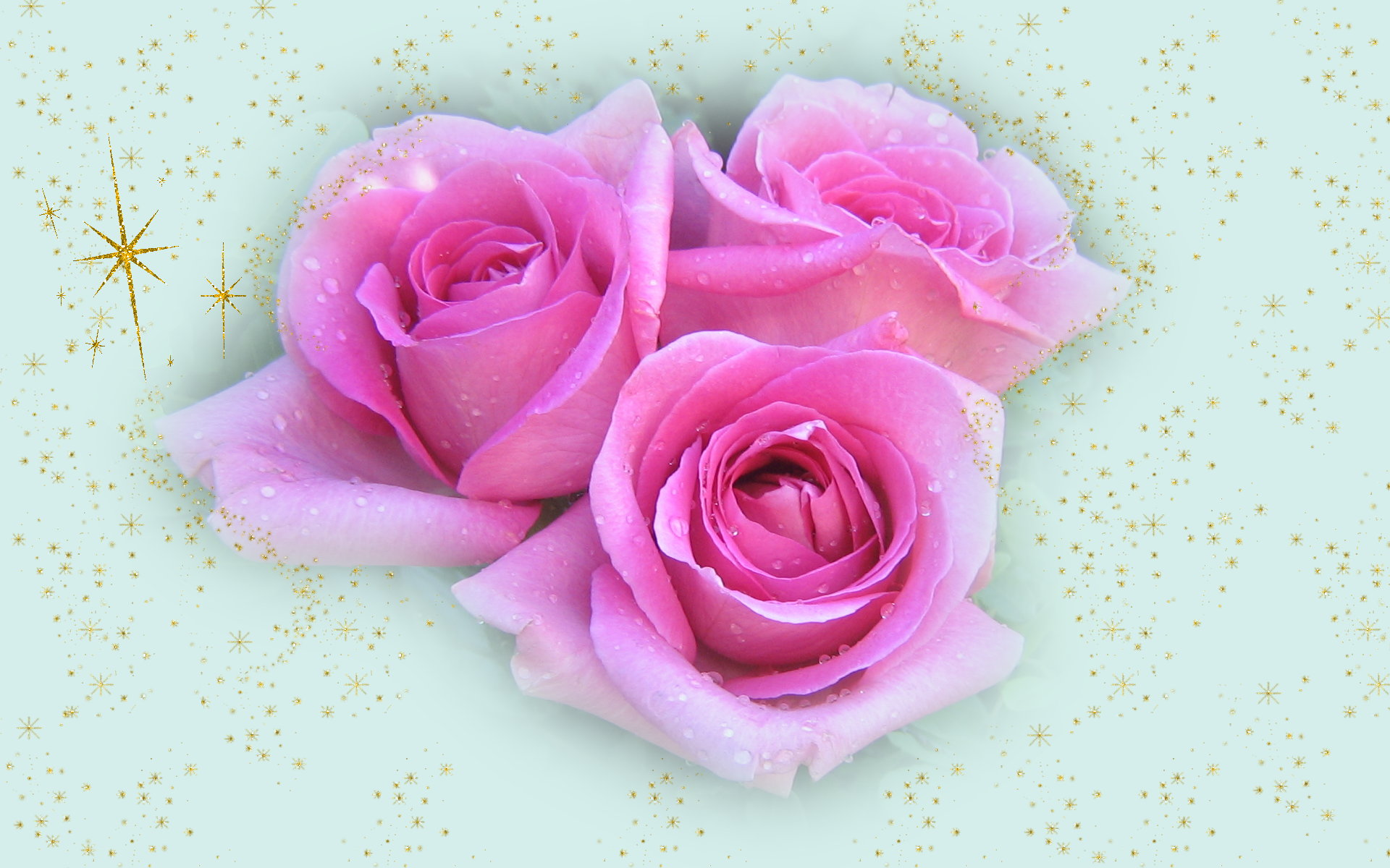 widescreen christmas wallpapers christmas pink roses 1920x1200