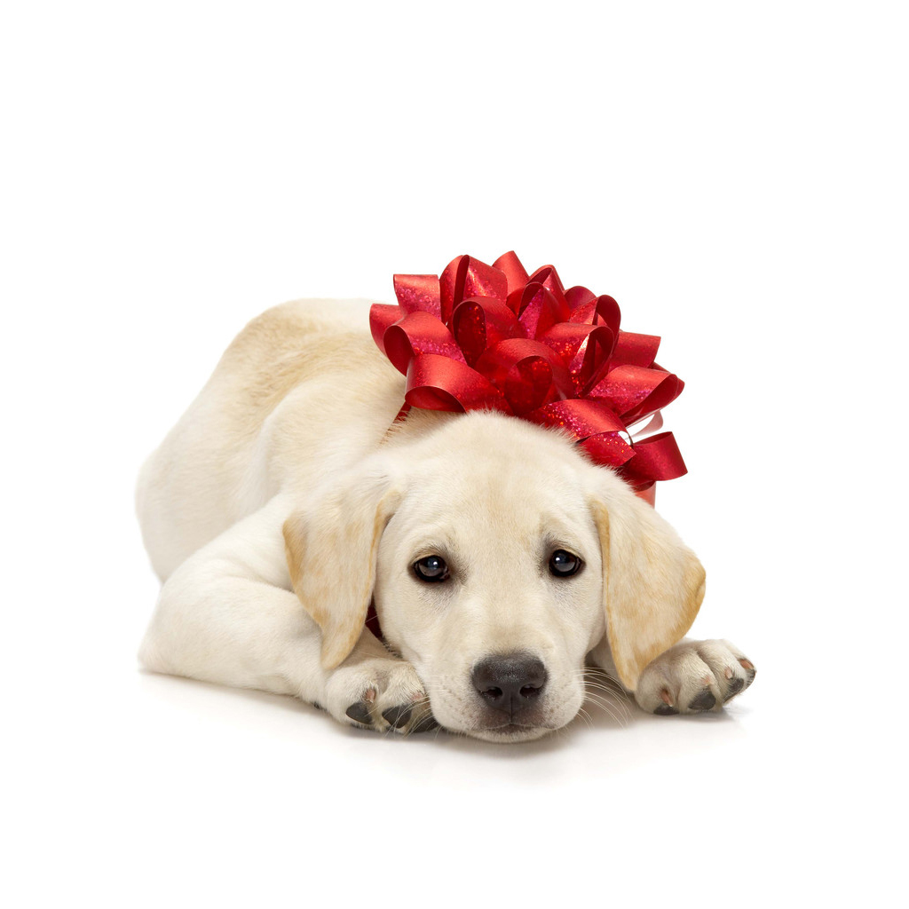 ... : Free Download Christmas Pets iPad Wallpapers - Christmas Dogs