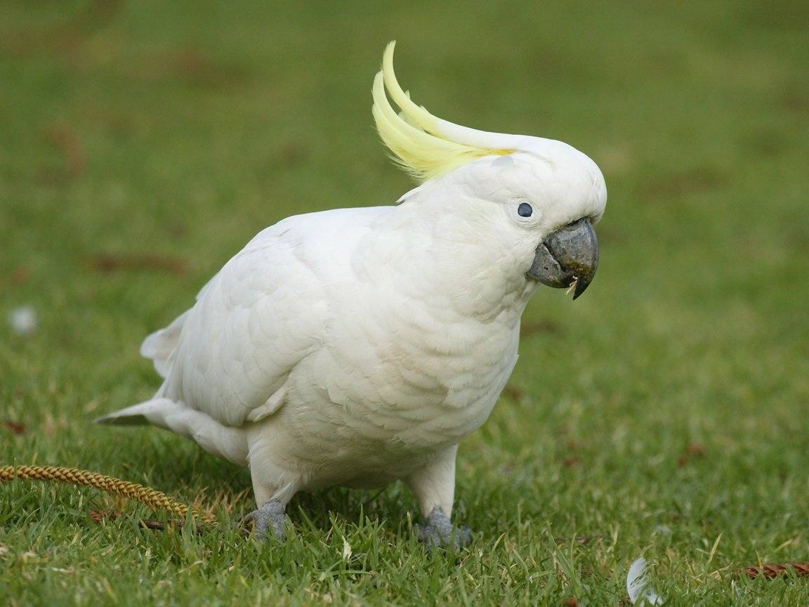 pictures top ten beautiful birds top 10 parrot wallpaper parrot 1152x864